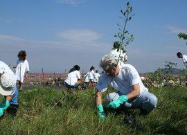 Projeto Florestas do Futuro