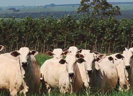 Fazenda utiliza biogás para se tornar autossustentável