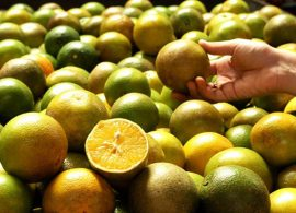 Novos requisitos para exportação de citros à UE