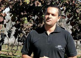 Dupla poda anual ajuda a melhorar qualidade do vinho
