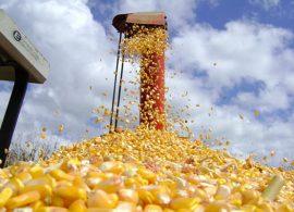 Conab prevê aumento de 3,6% na produção dos quatro principais grãos do país