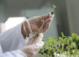 Cuidados na germinação garantem maior produtividade