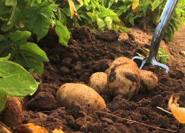 Fungicida mais eficiente e menos tóxico terá registro liberado
