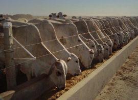 Quimtia Brasil lança enzima específica para nutrição dos bovinos