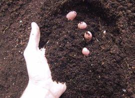 Aplicativo permite classificar solos de diferentes áreas da fazenda