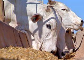 """Pecuária fecha uma década de """"vacas gordas"""""""