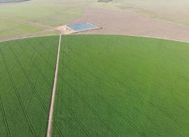 Um salto na produção de soja graças a irrigação