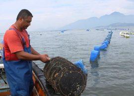 Produção de mariscos tem grande potencial de crescimento