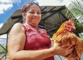 Galinha caipira é boa opção de renda na Agricultura Familiar