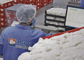 Bahia usa alta tecnologia para garantir qualidade do algodão