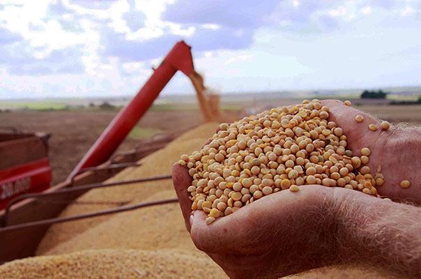 PIB do agronegócio cresce 4,62% de janeiro a maio – Revista Rural